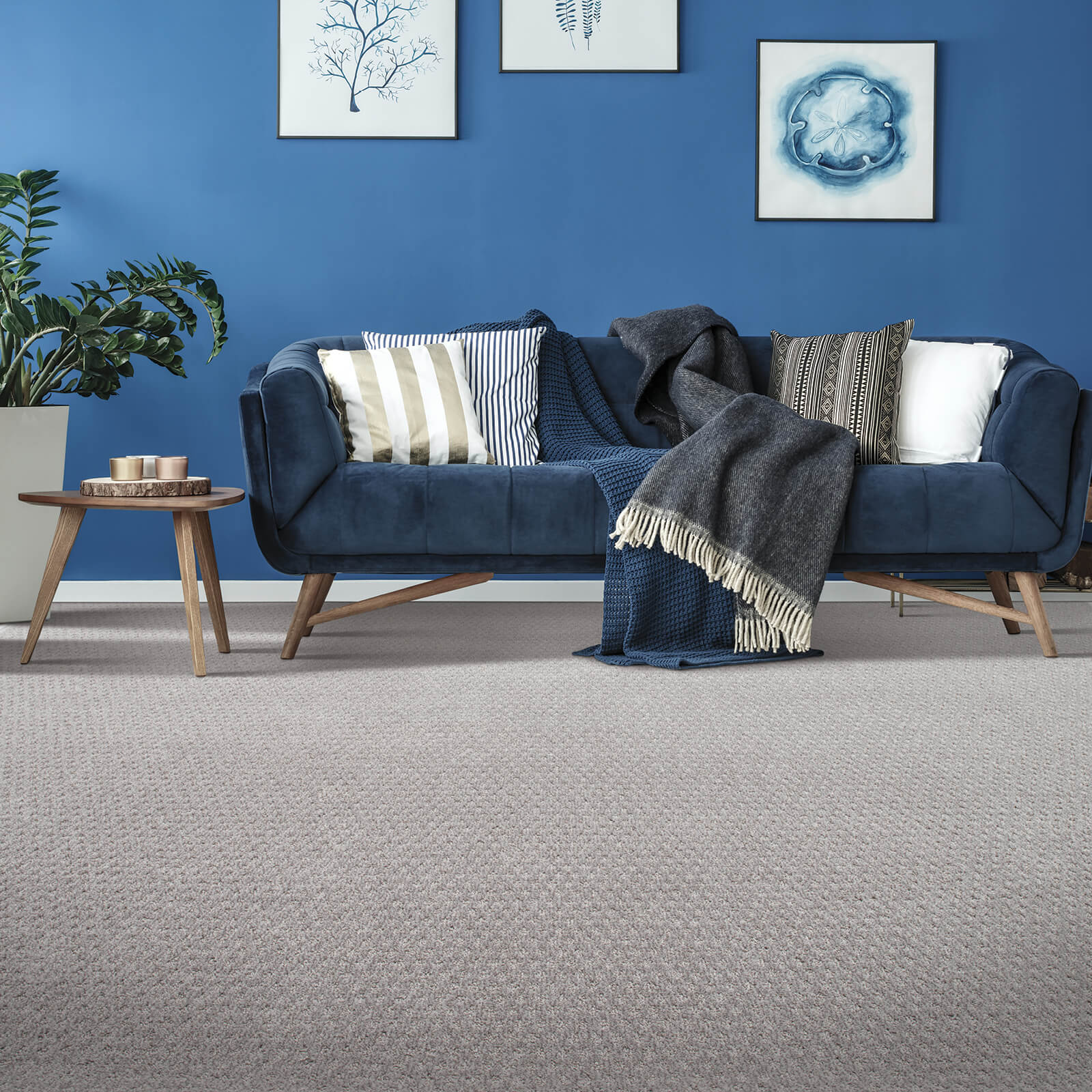 Blue couch on Carpet flooring | Floorida Floors