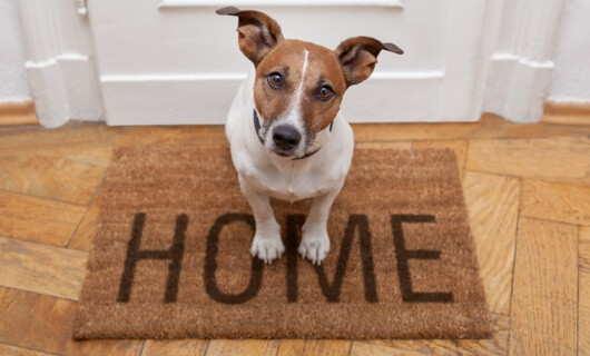 Pet on Door mat | Floorida Floors